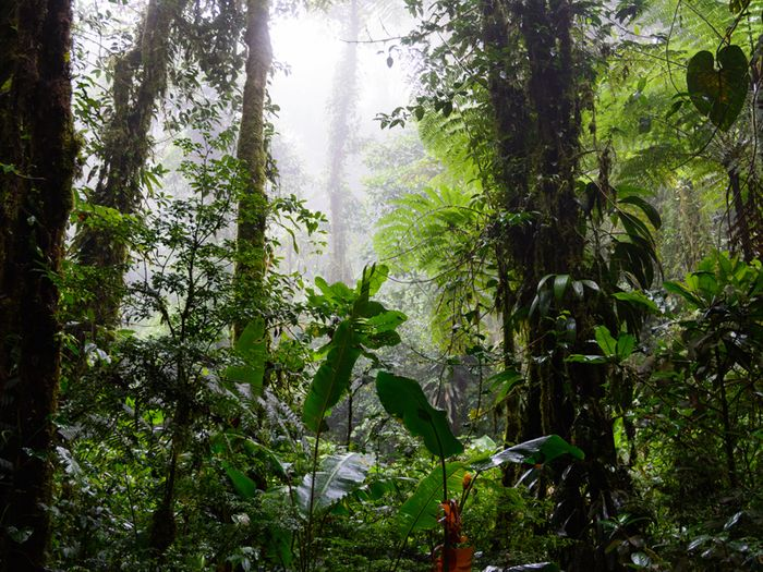 Cloud forests could be devastated by climate change