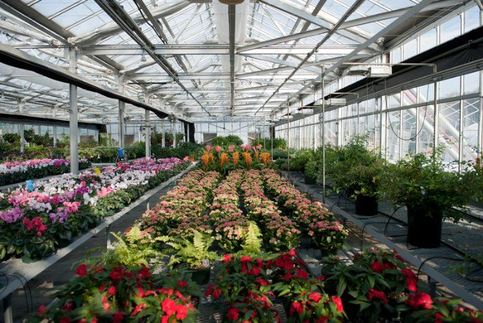 The US Botanic Garden in Washington DC is home to more than half of the world's plant species