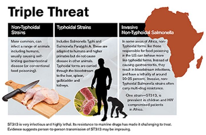 Showing the difference between Typhoidal, nonTyphoidal and invasive nonTyphoidal Salmonella