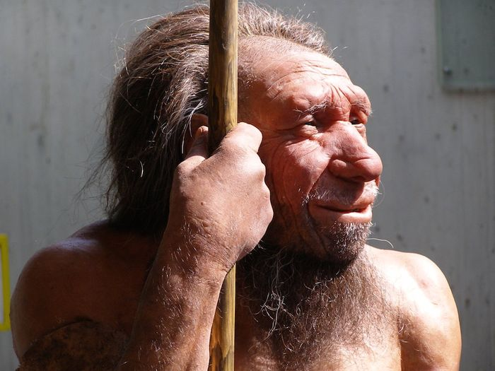 Neanderthals may have succumbed to infectious diseases carried to Europe by modern humans as they migrated out of Africa