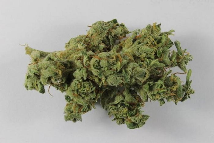 Marijuana buds are often two to three times as potent as they were 30 years ago.