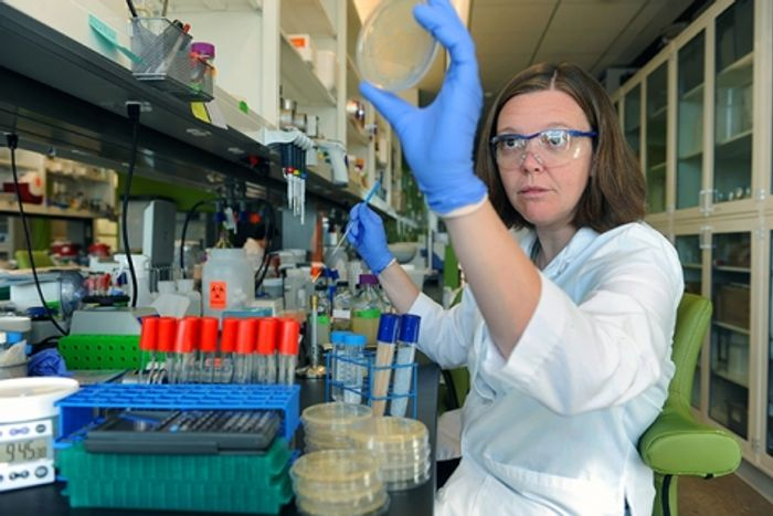 Microbiologist Dr. Elizabeth Shank inspects growing bacterial colonies.