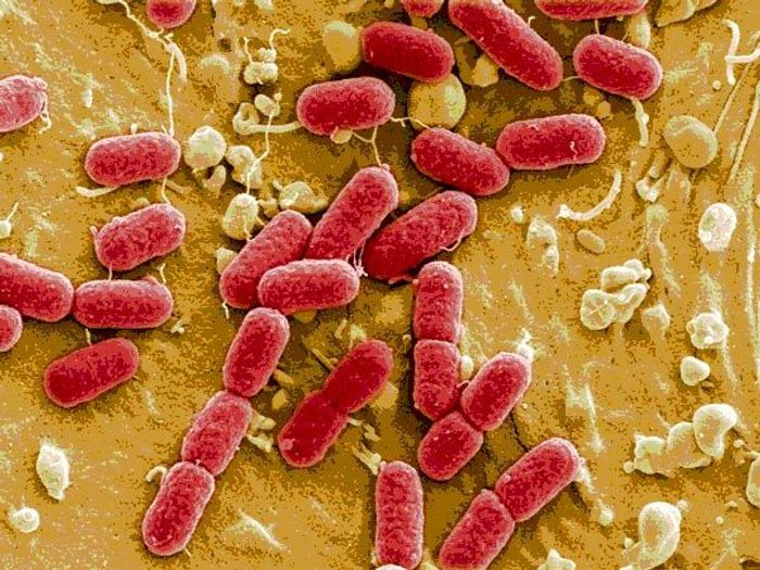 STEC are able to produce a specific type of enterotoxin known as Shiga toxin that leads to bloody diarrhea.