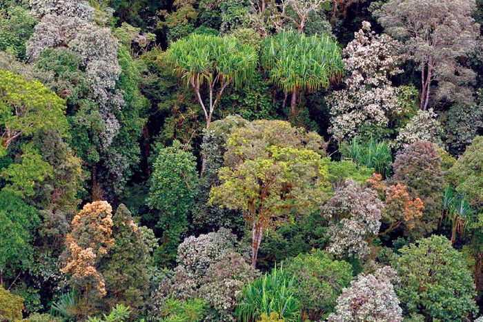 Forest diversity is crucial to drought resilience. Photo: ABC