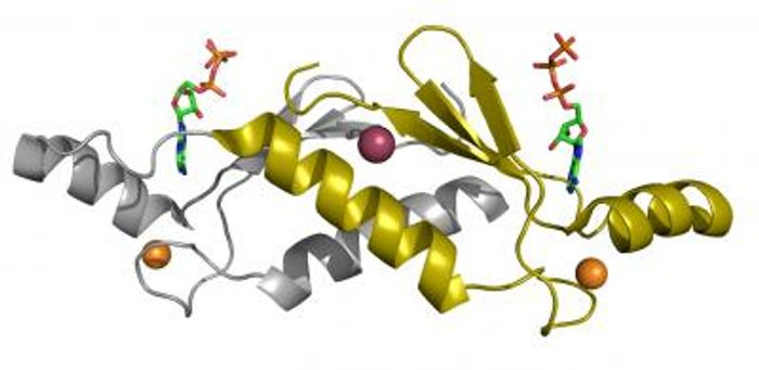 A ribbon structure of a protein / Credit:  Credit  John Chaput, the Biodesign Institute at Arizona State University