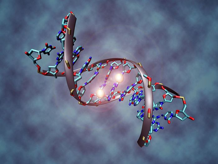 DNA molecule that is methylated on both strands on the center cytosine. DNA methylation plays an important role for epigenetic gene regulation in development and cancer. Credit: Christoph Bock, Max Planck Institute for Informatics