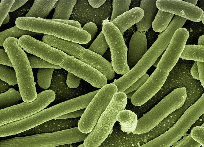 Could bacteria be to blame for many chronic illnesses? / Credit: Max Pixel
