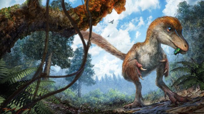 An artist's rendition of a coelurosaur, which is the type of dinosaur this fossil is believed to have come from.
