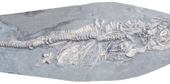 The fossil was incredibly well-preserved.