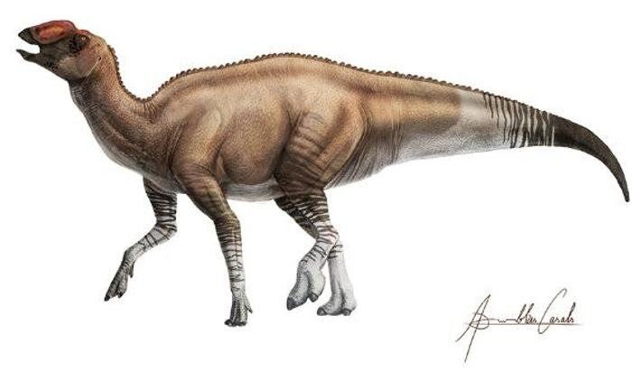 An artist's impression of A. palimentus.