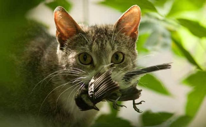 Outdoor cats are a heated debate in the birding world. Photo: Care2