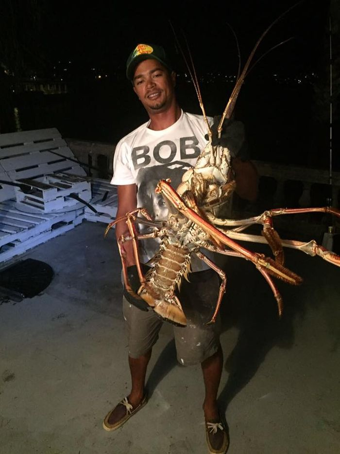 The large 14-pound lobster caught by fishermen in Bermuda following Hurricane Nicole.
