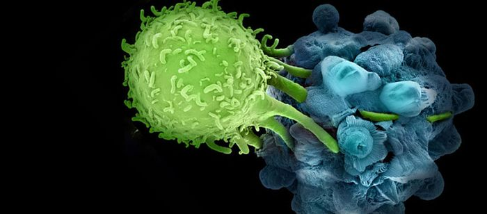 Credit: Fred Hutchinson Cancer Research Center