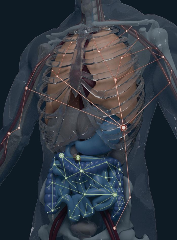A model of the human body showing distinct B cell clonal networks in the gastrointestinal tract and in the blood-rich organs such as bone marrow, spleen, and lung. Source: Alexander H. Farley
