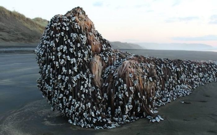 This strange object washed up on a beach in New Zealand earlier this month.