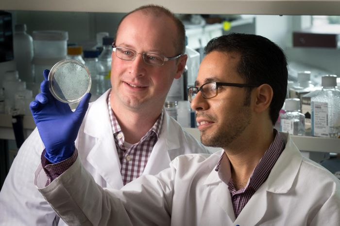 Ben Youngblood, Ph.D., pictured with Hazem Ghoneim, Ph.D., and colleagues showed how memory CD8 T cells arise from a small subset of effector CD8 T cells in laboratory models. Credit: Seth Dixon/St. Jude Children's Research Hospital