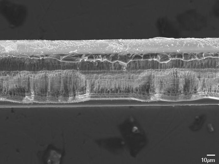 A side view of a bioresorbable fiber Bragg grating after it has dissolved in liquid. Maria Konstantaki, Foundation of Research and Technology - Hellas