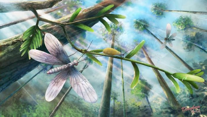 An artist's impression of a 200 million-year-old insect involved in this study.