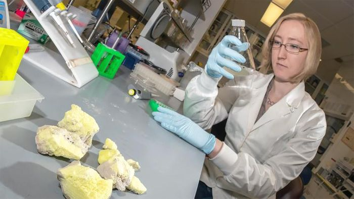 Nebraska's Sophie Payne and colleagues have reported the first experimental evidence of epigenetics in single-celled archaea. / Credit: Greg Nathan | University of Nebraska-Lincoln