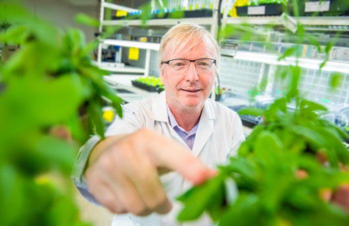 Professor Jim Whelan in his laboratory at the La Trobe Institute for Agriculture and Food at AgriBio, Melbourne, Australia. / Credit: La Trobe University
