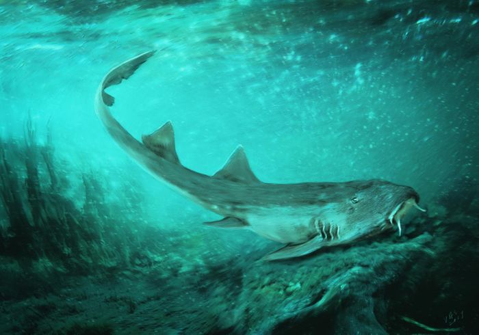 An artist's impression of Galagadon, a newly-discovered shark species that existed with T. Rex.