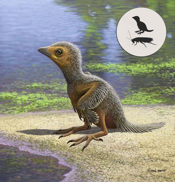 An artist's rendition of the small bird.