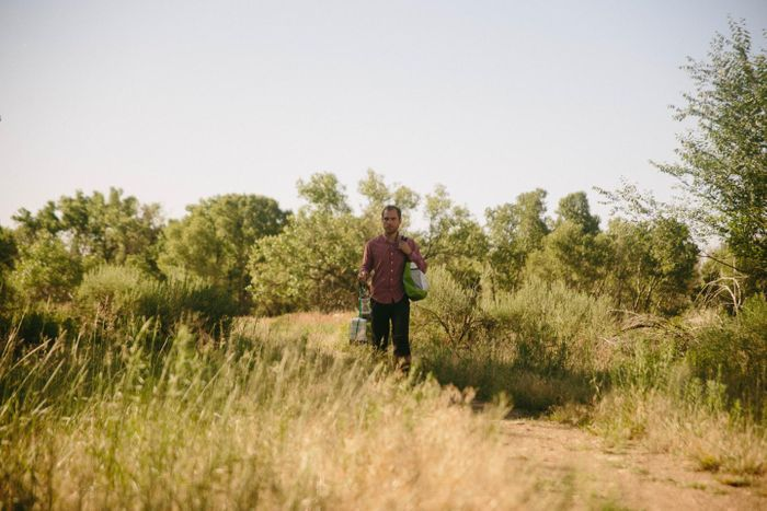 Daniel Hartman, lead author of the study and a graduate student pursuing a doctoral degree in microbiology, collecting mosquitoes in Fort Collins, Colorado. / Credit: Kellen Bakovich/Colorado State University