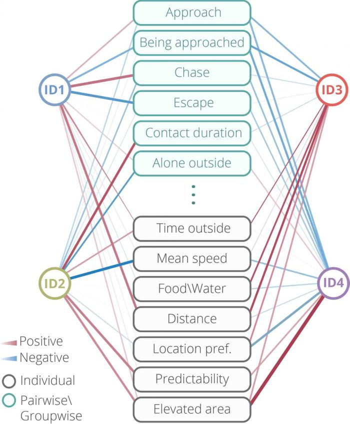 Based on the 60 behaviors, an algorithm found those relevant to personality, and mapped out four scales for assessing mouse personality. / Credit: Weizmann Institute of Science