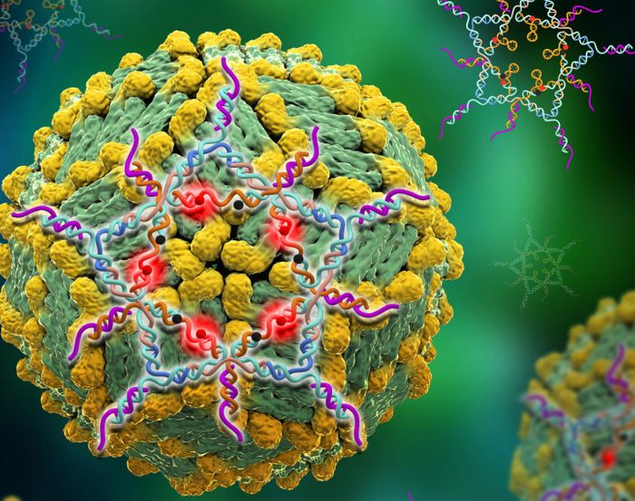 A structural DNA star designed to trap Dengue virus that lights up when the trap is sprung. / Credit: Image courtesy of Xing Wang