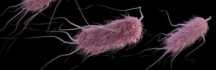 A computer-generated image (based on SEM imagery) of a group of pathogenic Escherichia coli. / Credit: CDC/ Antibiotic Resistance Coordination and Strategy Unit / Alissa Eckert - Medical Illustrator