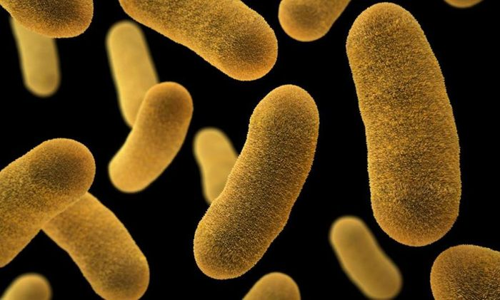 An illustration based on SEM imagery and depicting Yersinia enterocolitica bacteria. / Credit: CDC/ James Archer / Illustrator: Jennifer Oosthuizen
