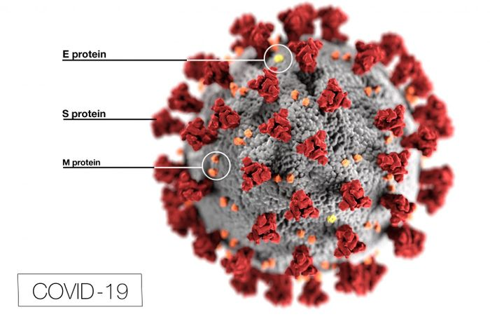 SARS-CoV-2 / Credit: Centers for Disease Control and Prevention