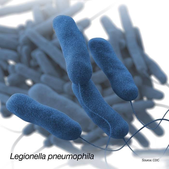 A 3D, computer-generated image of a group of Gram-negative, Legionella pneumophila, bacteria. The recreation was based on SEM imagery. / Credit: CDC/ Sarah Bailey Cutchin / Illustrator: Dan Higgins