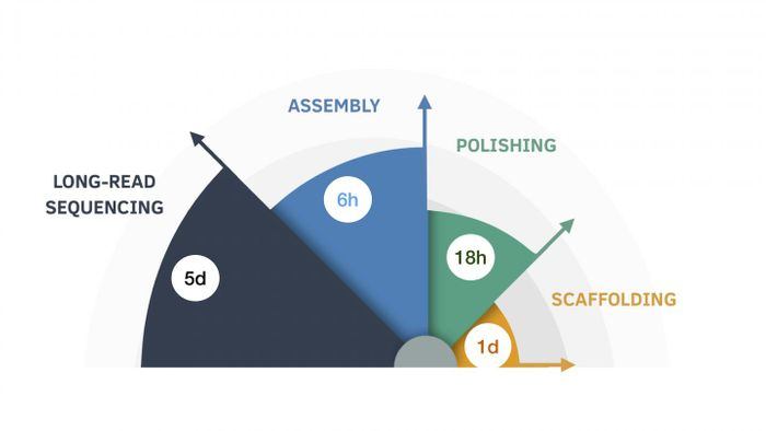 The nine-day assembly process, broken down by length of time for each step. / Credit: UC Santa Cruz Genomics Institute