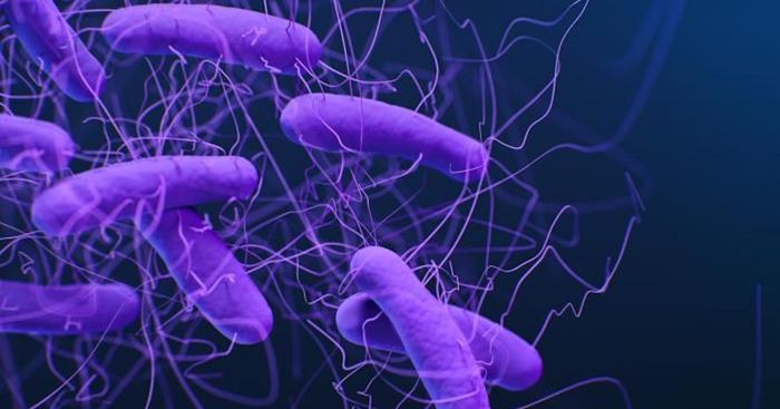 A medical illustration of Clostridioides difficile bacteria / Credit: CDC/ Antibiotic Resistance Coordination and Strategy Unit / Medical Illustrator: Jennifer Oosthuizen