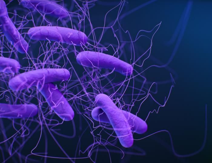 A medical illustration of Clostridioides difficile bacteria, formerly known as Clostridium difficile / Credit: CDC/Antibiotic Resistance Coordination and Strategy Unit / Photo Credit: Medical Illustrator: Jennifer Oosthuizen