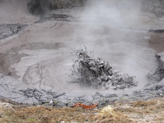 Sulfolobus acidocaldarius thrives in geothermal mud pools like this one in New Zealand / Credit: Lancaster University