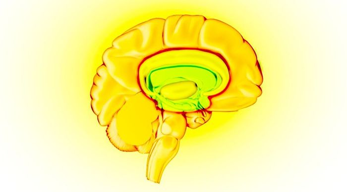 Brain - reward circuit highlighted. / Credit: Graphic by NIDA (Natl Institute on Drug Abuse)