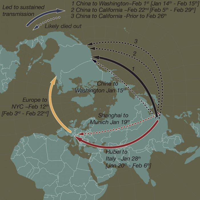 This schematic map shows early and apparently 'dead-end' introductions of SARS-CoV-2 to Europe and the US (dashed arrows). Successful dispersals between late January and mid-February are shown with solid arrows: from Hubei Province, China to Northern Italy, from China to Washington State, and later from Europe (as the Italian outbreak spread more widely) to New York City and from China to Californi / Credit: Andrew Rambaut/University of Edinburgh and Jeffrey Joy/University of British Columbia