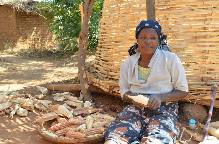 Maize (corn on the cob) is the most important staple food in large parts of Africa. Maize preparation in rural Malawi. / Credit: S Koppmair