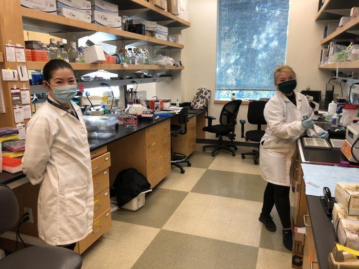 Sachiko Haga-Yamanaka (left) and Quynh Anh Thi Nguyen. Credit  Haga-Yamanaka lab, UC Riverside