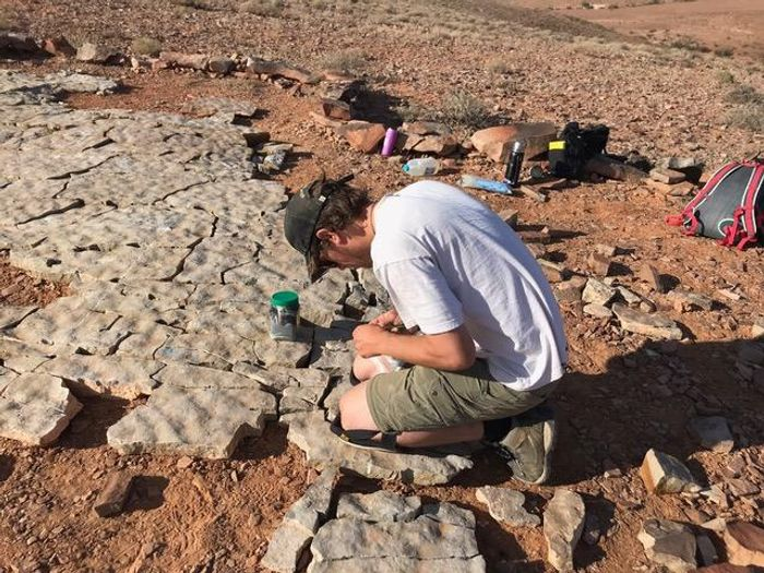 Paleontologist Scott Evans studying fossils in the Australian outback./ Credit: Droser Lab/UCR
