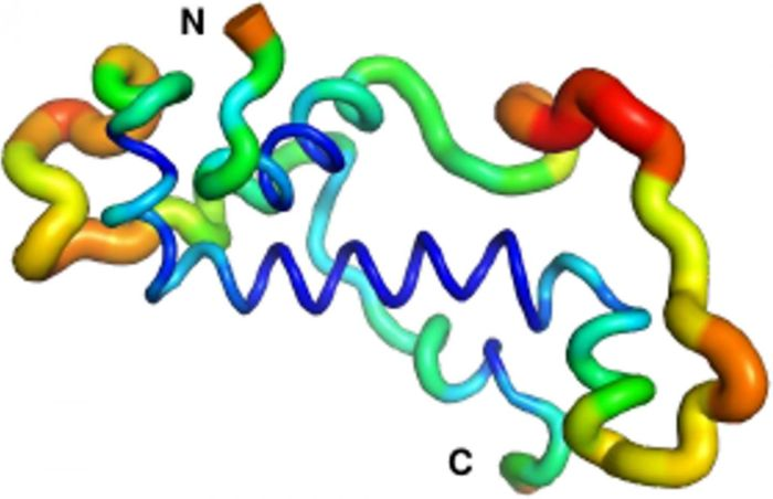 Regions of the protein's flexibility: not very flexible (blue), moderately flexible (green/yellow) and highly flexible (red). However, both the central alpha helix and the N-terminus (start of the protein) display stable folding in comparison with the rest of the protein / Credit: Adam Damry