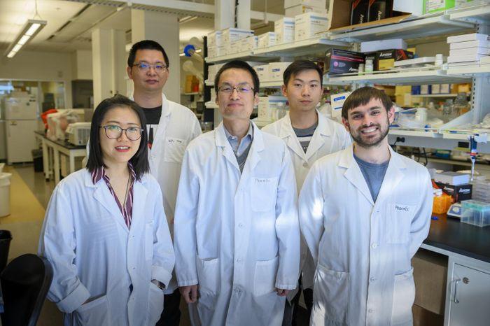 From left to right, study authors Yuening Liu, Peng Xia, Zhaokang Cheng, and Jingrui Chen and graduate student Joshua Gallo. / Credit: Cori Kogan, WSU Health Sciences Spokane