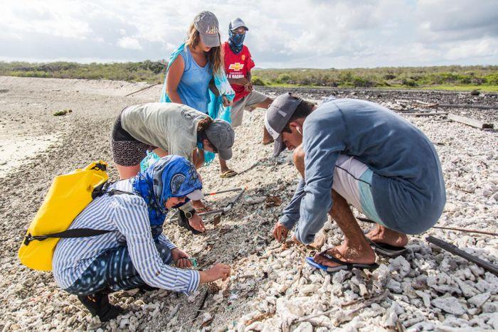 Plastic sampling on a beach in Galapagos. / Credit: Adam Porter