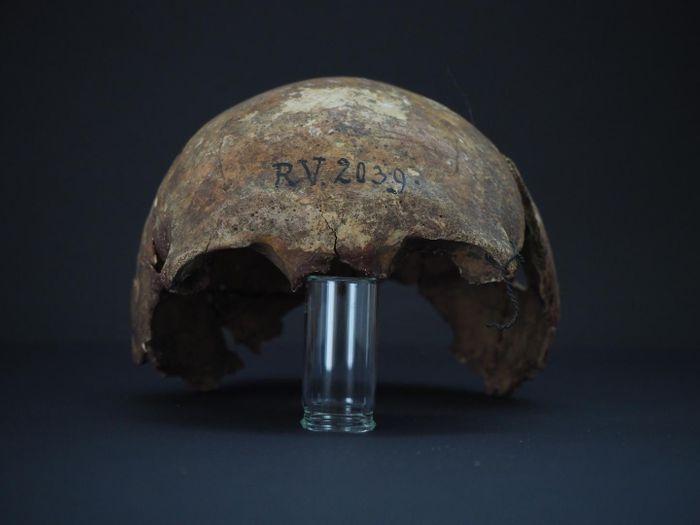 The skull of RV 2039 / Credit: Dominik Göldner, BGAEU, Berlin