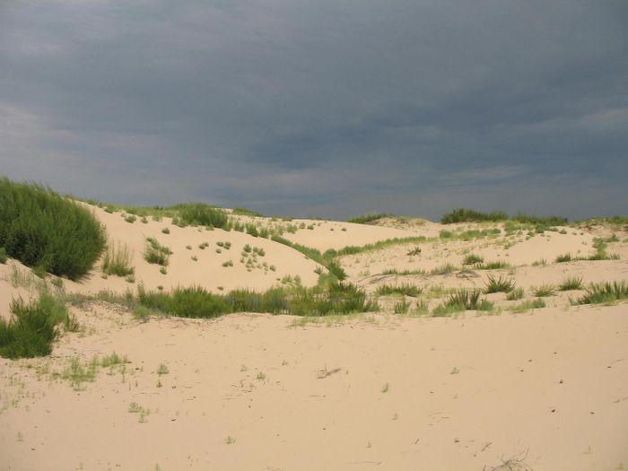 Degraded vegetation in Horqin Sand Land in Inner Mongolia, China  / Photo courtesy: Lixin Wang, IUPUI