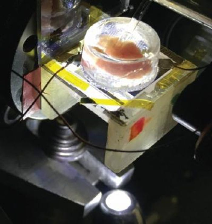 A heart removed from a chicken embryo sits in the CAGE device, which uses a sheet of graphene under the heart to measure tiny electrical fields produced when the heart beats. / Credit: Photo by Halleh Balch, Allister McGuire and Jason Horng