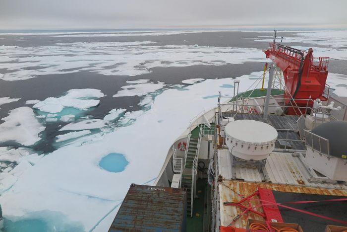 Sea ice on the Wandel Sea north of Greenland; photo taken Aug. 16, 2020 from the German icebreaker Polarstern / Credit: Felix Linhardt/Kiel University