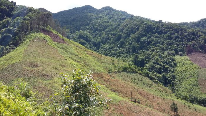 Forests cleared for agriculture on Vietnam mountains / Credit: Dominick Spracklen